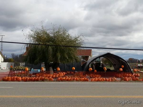 helloween-12-00-pumpkin-yard.jpg
